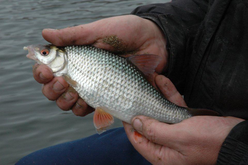 1 Köderfisch.JPG