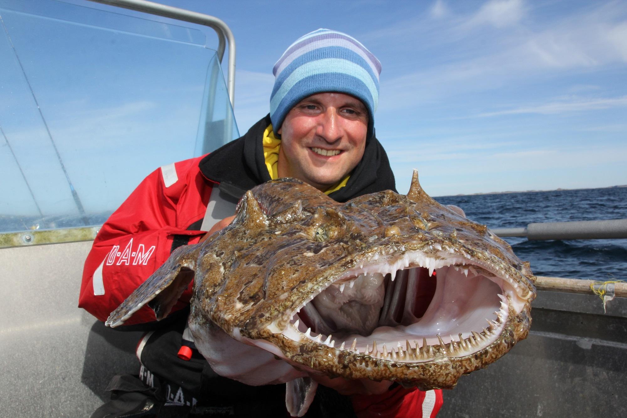 In 140 Metern Tiefe nahm dieser Seeteufel den Naturköder. Er ist eine wahre Delikatesse