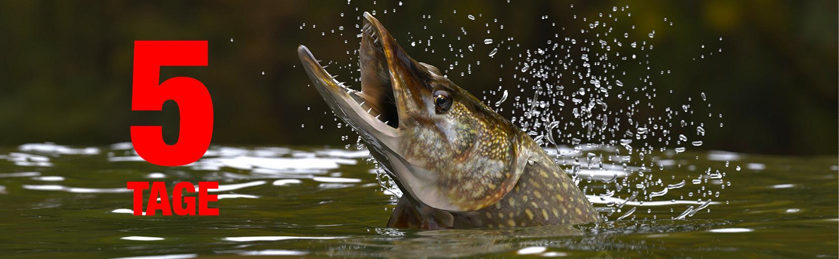 Catch more Fish_5_Beitragsbild-Anglerboard_600x240px (1).jpg
