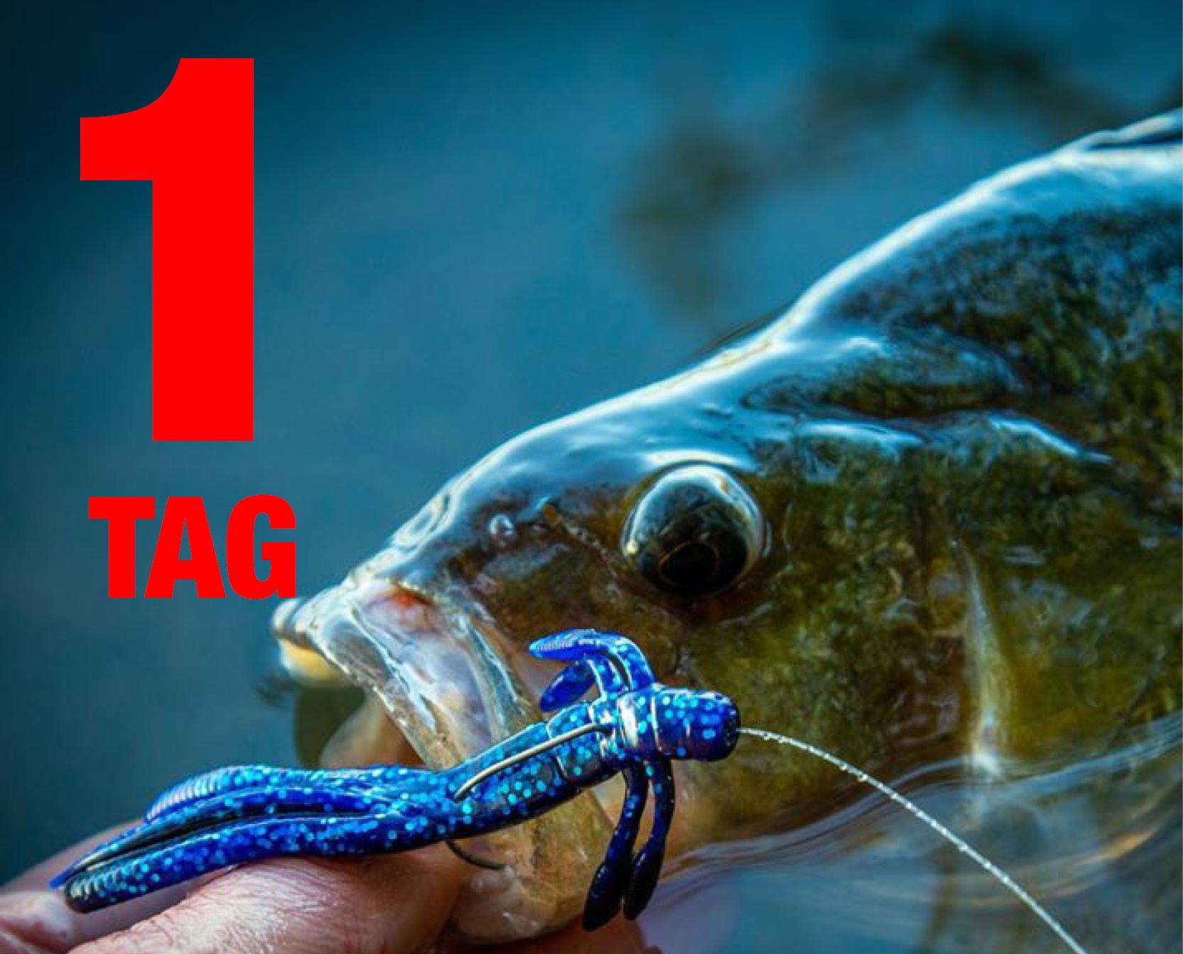 Catch more Fish_facebook_Quadrate_1.jpg