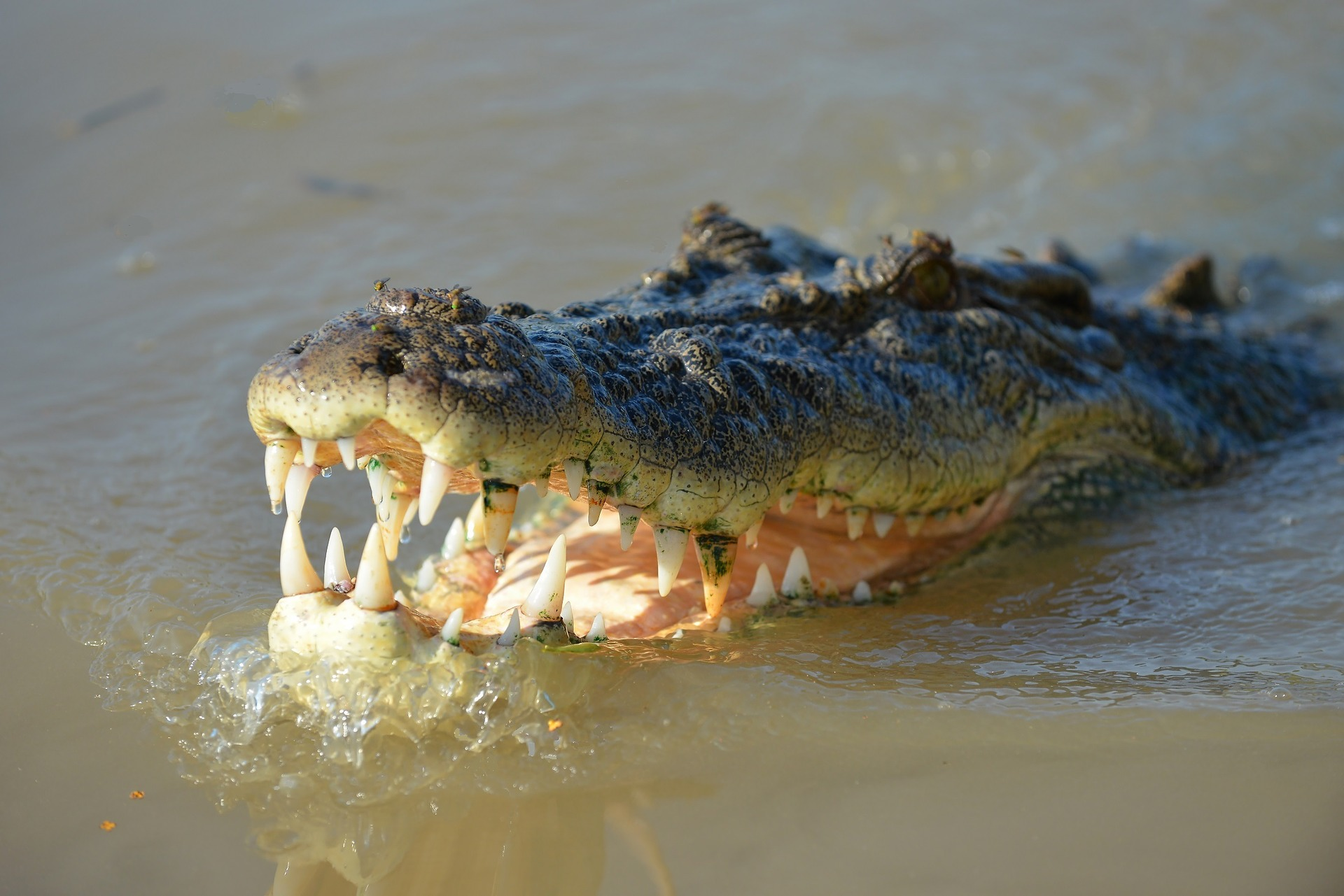 crocodile-1402089_1920.jpg
