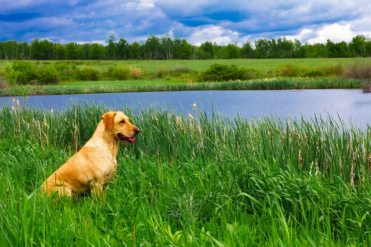 dog-1903021_1280.jpg