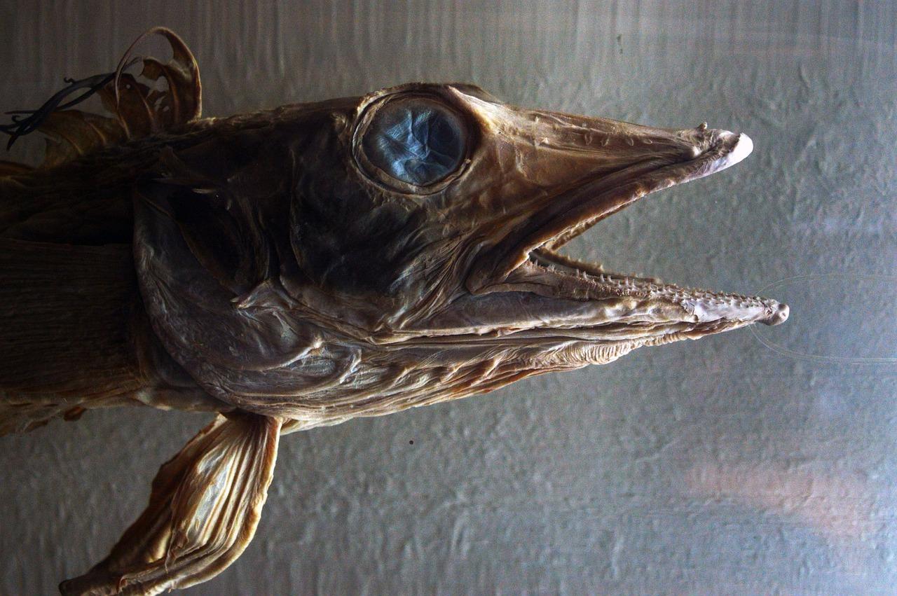 Fisch_Museum.jpg