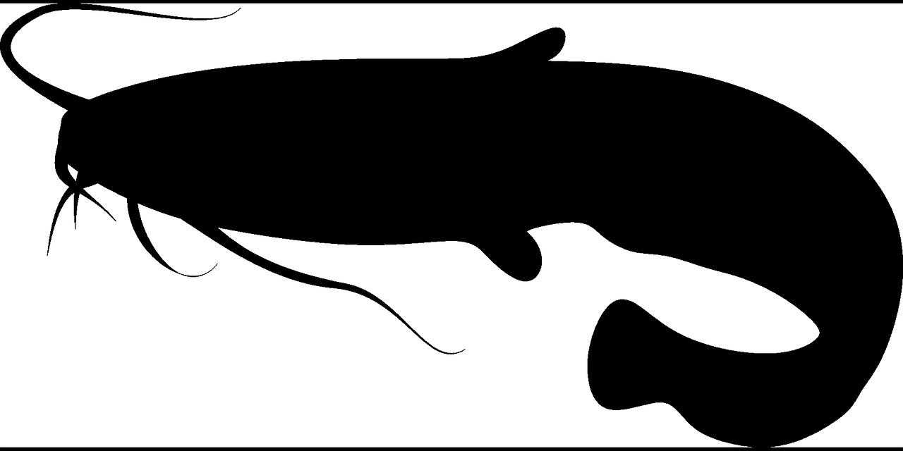 fish-285827_1280.png