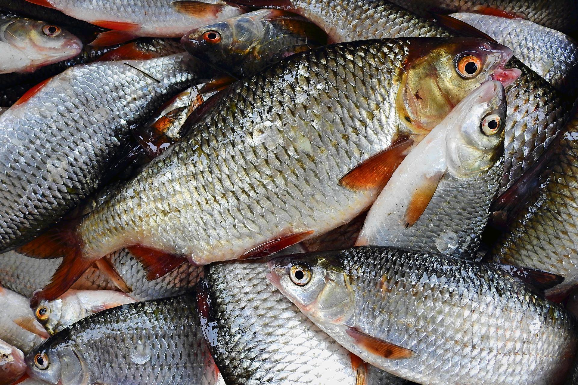 fish-3993416_1920.jpg
