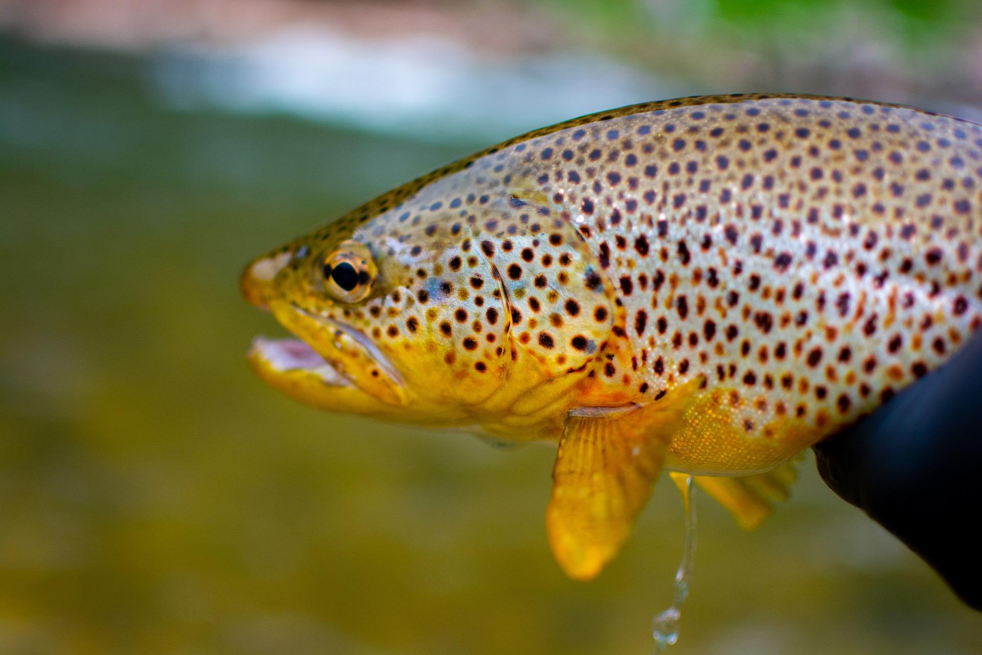 fish-5566856_1920.jpg