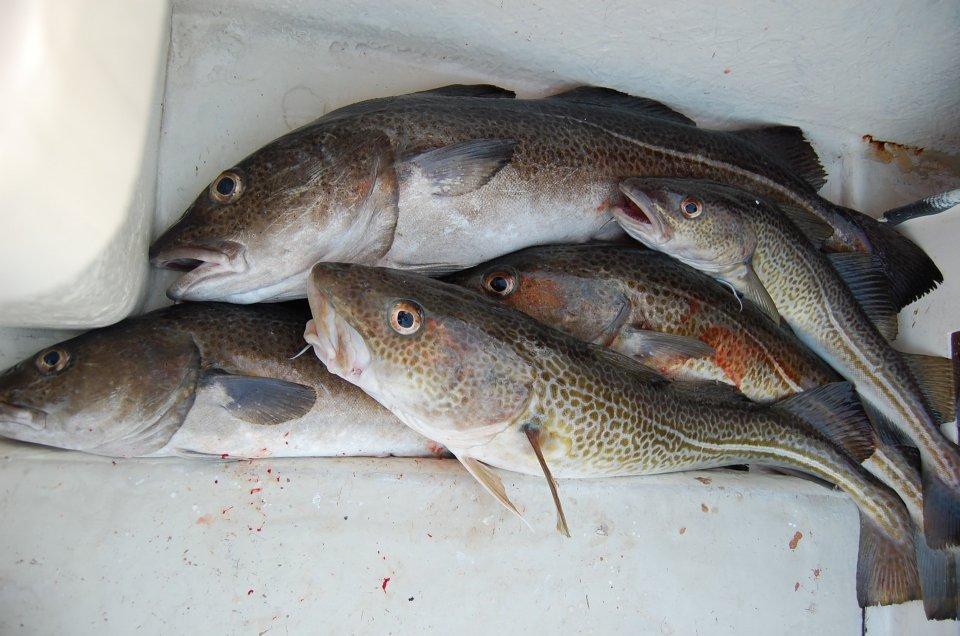 fishing-425342_1920.jpg