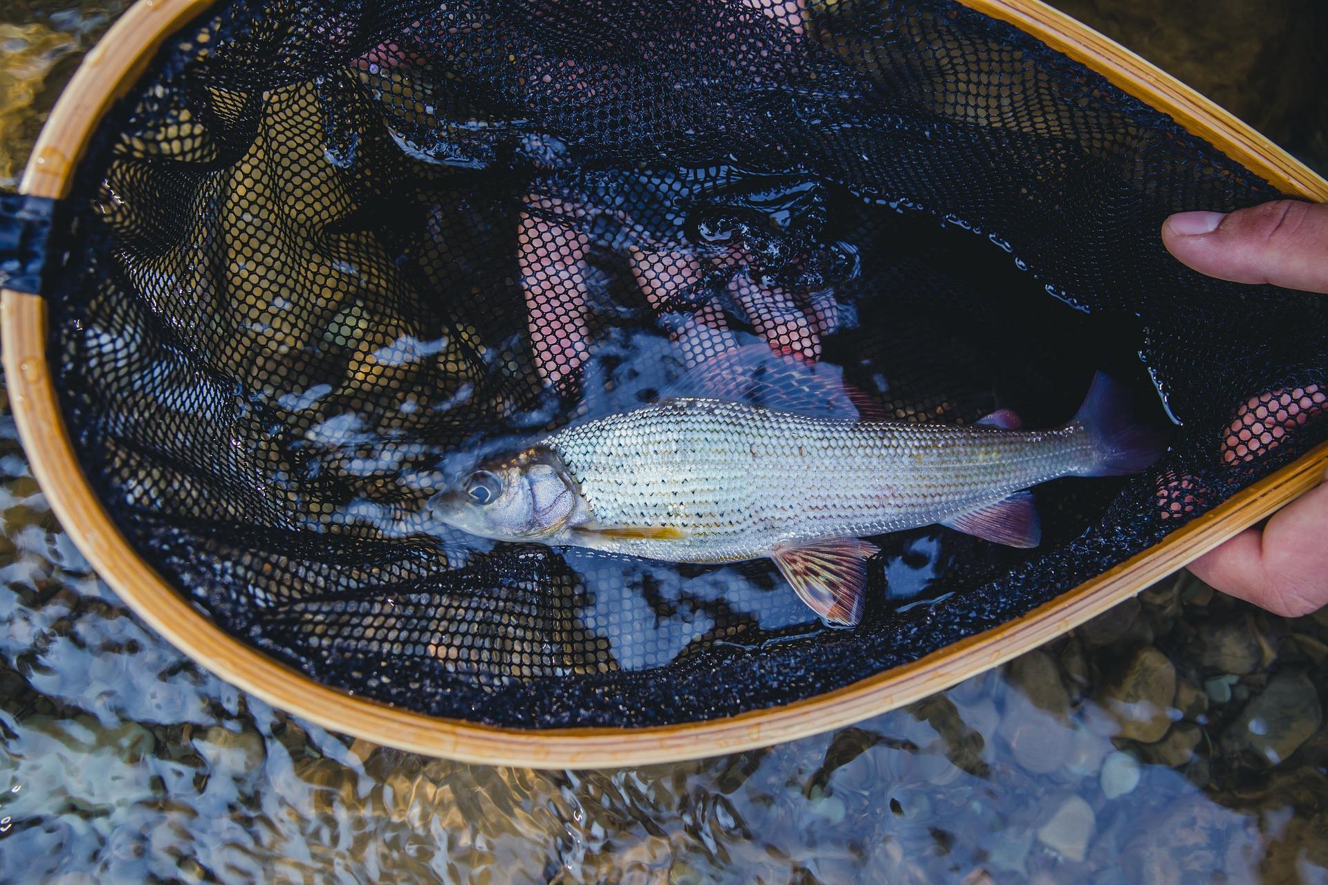 flayfishing-4685964_1920.jpg