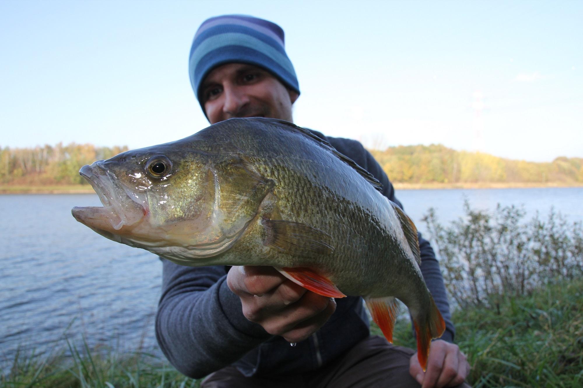 Besonders die besseren Raubfische gehen Jesco im Herbst an den Köder. Dann fängt er tolle Barsche und Zander beim Spinnangeln