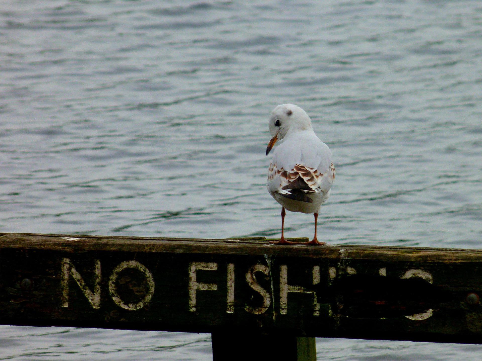 no-fishing-4848114_1920.jpg
