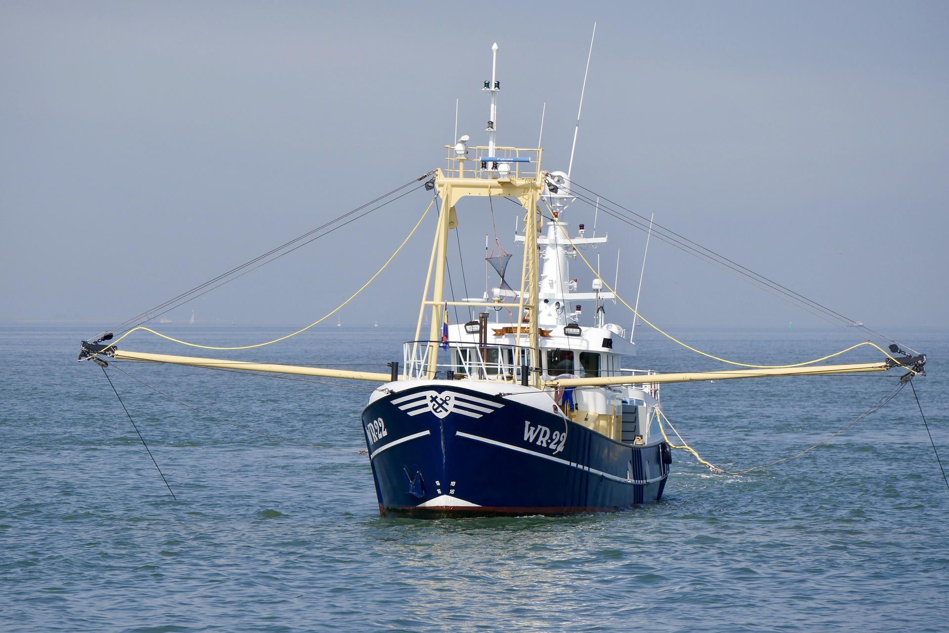 shrimp-4806398_1920.jpg